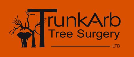 TrunkArb tree stump grinding