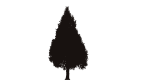 Professional Tree Inspection