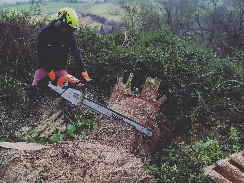 Tree-surgery-saw