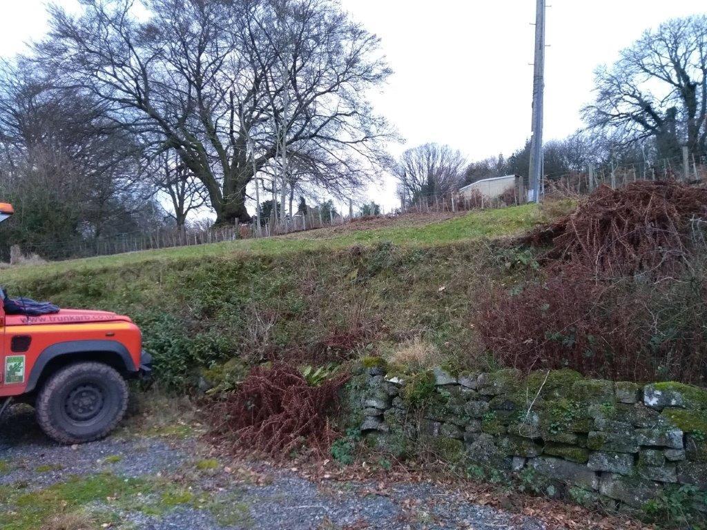 hedge-planting2