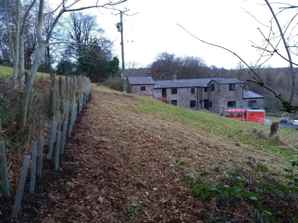 hedge-planting3