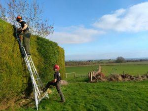 Work on hedges
