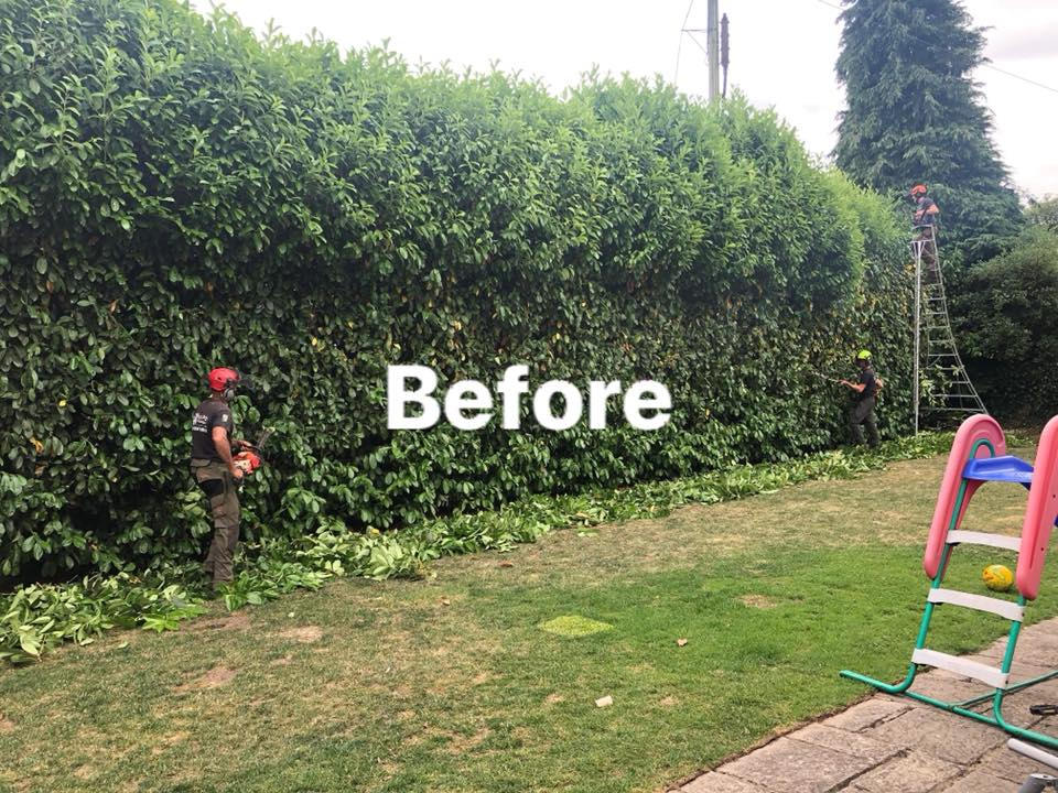 before hedge reduction