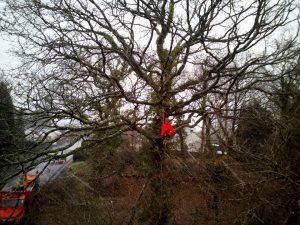 Climbing tree surgery