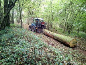woodland tree surgery