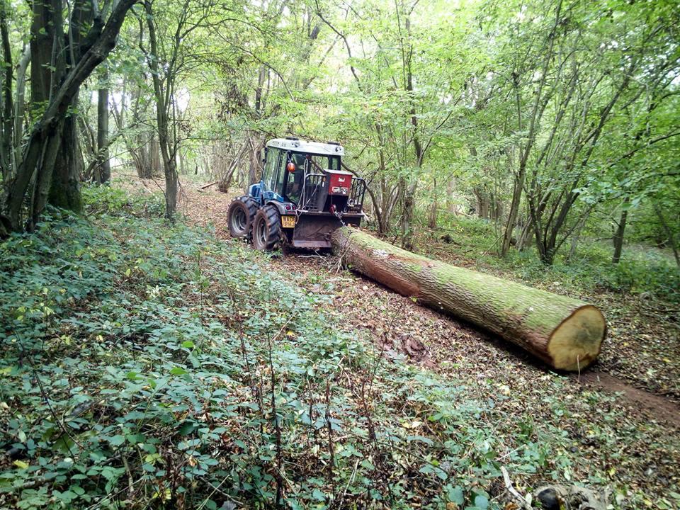 woodland-management2